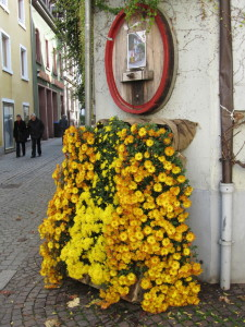 In Lahr, Germany, at the Chrysanthemum Festival, we found this pub with a wine barrel flowing mums