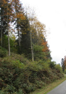 A view along our very narrow two lane road, going over hill and dale and through the woods